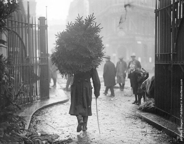 1915: A soldier carrying a christmas tree