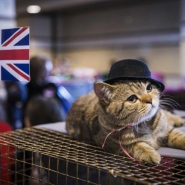 Вы стали настоящим англичанином, если… Блог Джерри Миллера