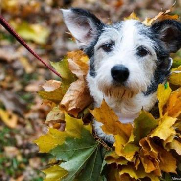 Фонд «Лапа». Как помочь животным в России, если вы живете в Британии