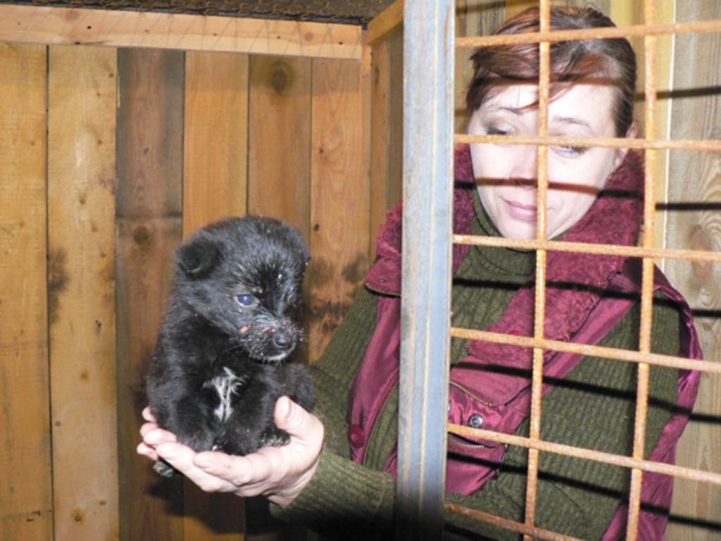 Бездомный щенок, найденный волонтерами в Екатеринбурге