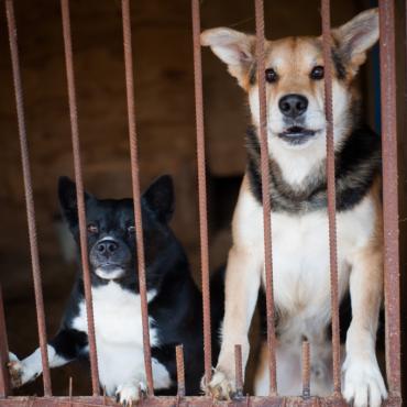 Собаки в клетках — живые. Репортаж из приюта