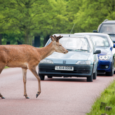 От страховки до парковки. Сколько стоит содержание автомобиля в Лондоне? Цифры и факты