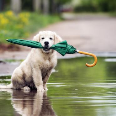 Почему проливной дождь у англичан называется «cats and dogs»?