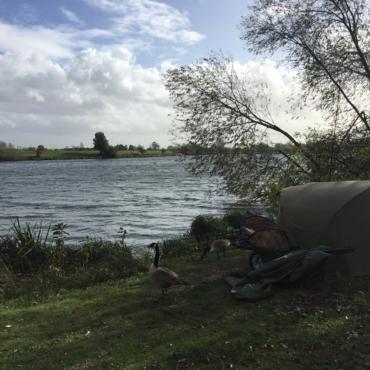 Сбежать из Лондона. Попытка вторая: болота Walthamstow Wetlands
