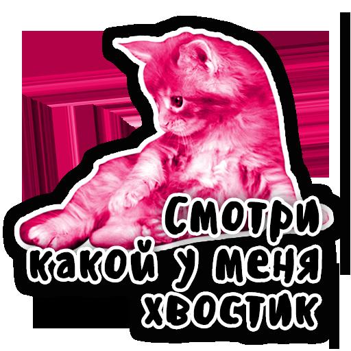 Закрытый клуб Killing Kittens