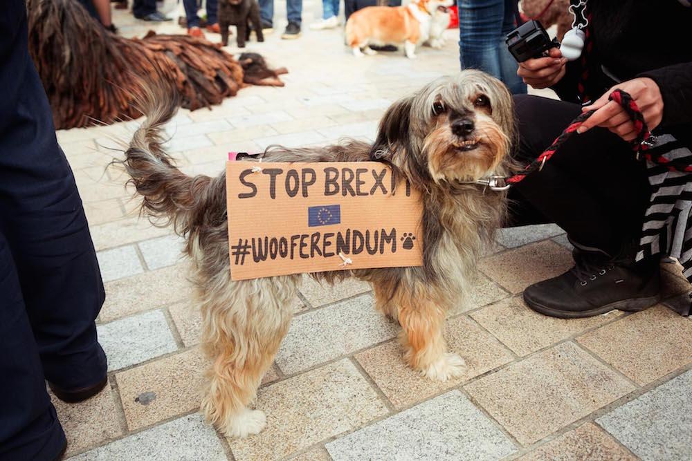 Возле парламента против «Брекзита» протестовали сотни собак (фото)