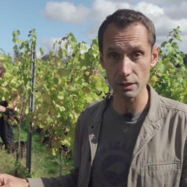 White English: где делают хорошее английское вино и сколько оно стоит?