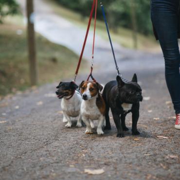 До £64 000 в год за выгул собак. Как работают в Лондоне догвокеры