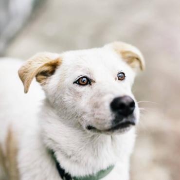 Как помочь животным в России, если вы живете в Британии? Сегодня это можно сделать особенно эффективно