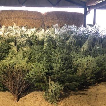 Где покупать елку в Англии, чтобы принести домой праздничное настроение