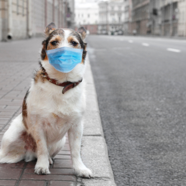 Питомец на карантине. Все, что надо знать владельцам домашних животных в UK