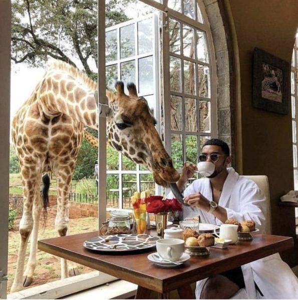 Жираф-отель