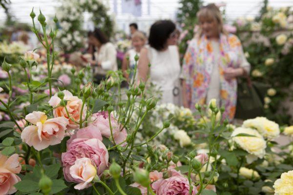 Chelsea Flower Show впервые пройдёт онлайн