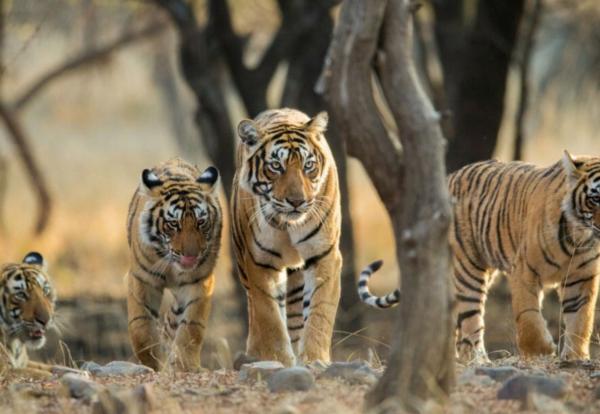 Защита дикой природы и борьба с браконьерами