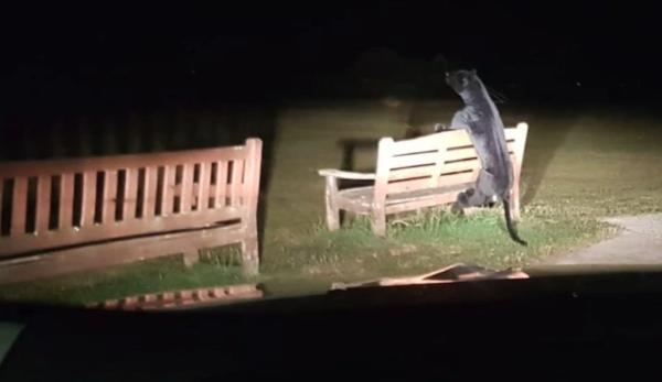 Плюшевая пантера