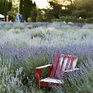 Идея на выходные: 7 лавандовых ферм в Англии