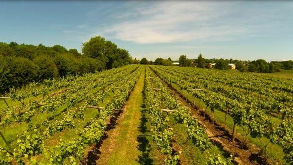 Woodchester Valley Vineyard