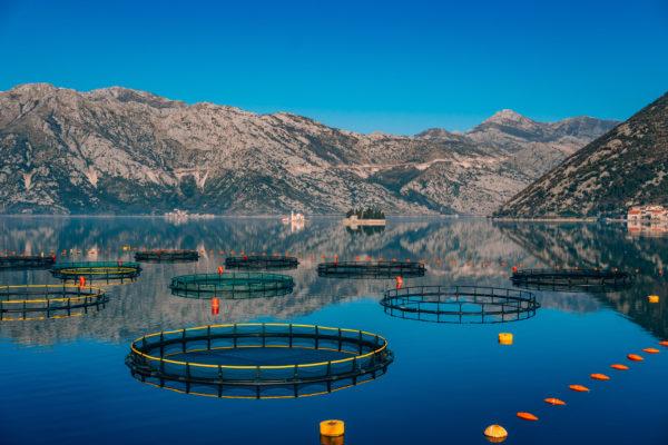 Ферма по разведению лосося