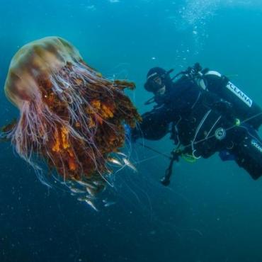 На пляжи Северной Ирландии вынесло сотни медуз – видео