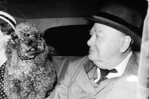 Собака Уинстона Черчилля