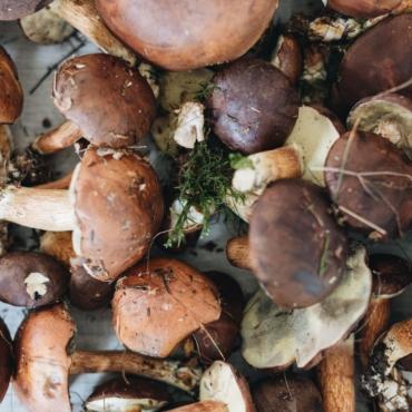 Джерри Миллер. Англичане и грибы. Часть 2