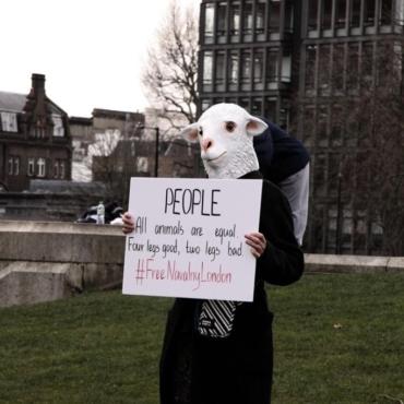 «Скотный двор» в центре Лондона: как прошла протестная акция