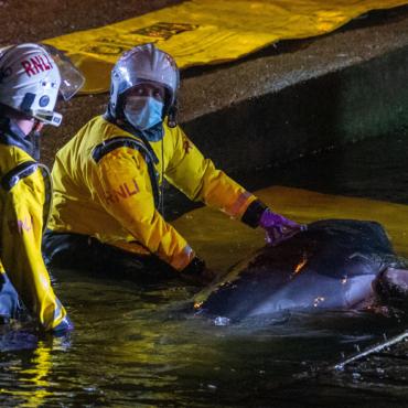 На юго-западе Лондона спасатели обнаружили кита, застрявшего в Темзе