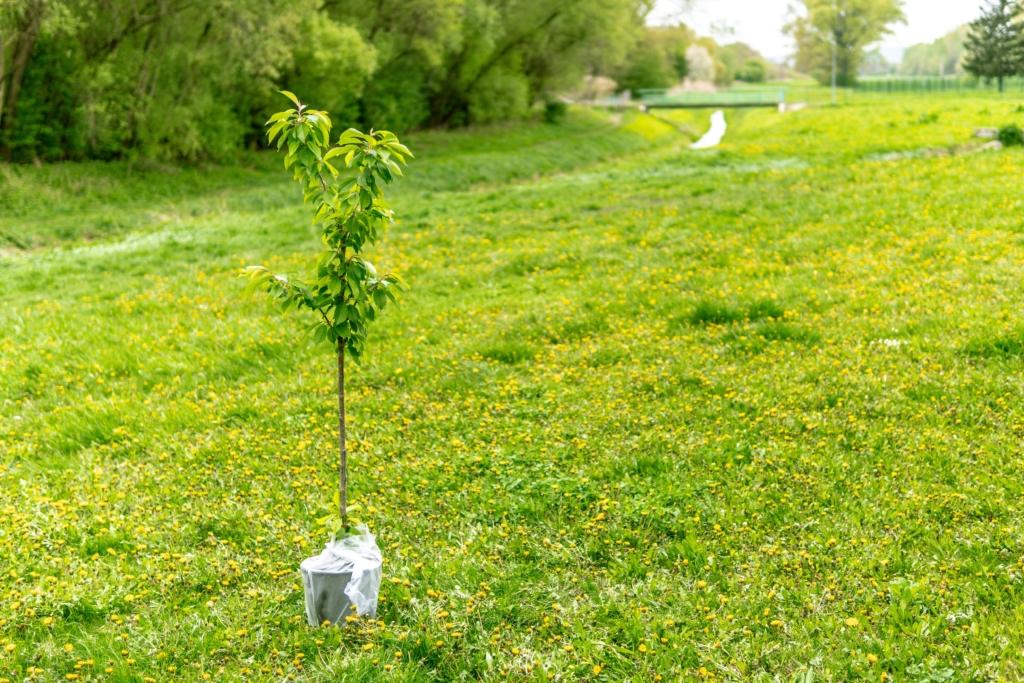 карта посадить дерево