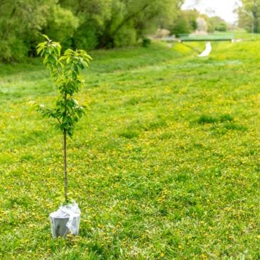 Жителей Великобритании призывают посадить по дереву в честь юбилея королевы Елизаветы II