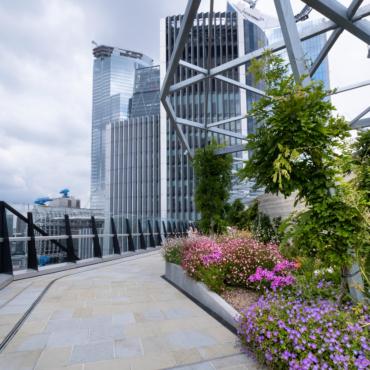 На крыше лондонского банка обнаружен редкий вид орхидей, считавшийся вымершим в Британии