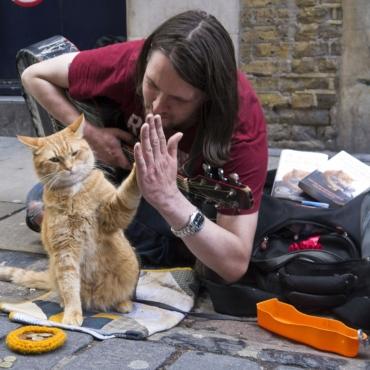 Памятник уличному коту по кличке Боб появится в Лондоне