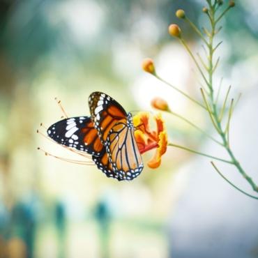 Из-за холодной весны в Великобритании стало меньше бабочек