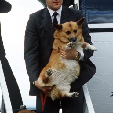 Корги, шпиц и кинг-чарльз-спаниель: каких собак предпочитали британские монархи