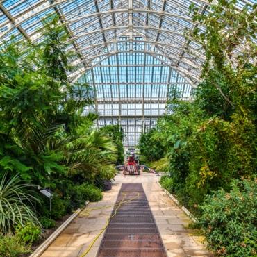 Коллекция растений в Kew Gardens признана самой разнообразной в мире — Книга рекордов Гиннеса